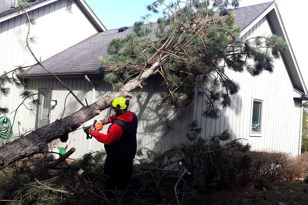 Tips for Tree Shaping in Burnaby
